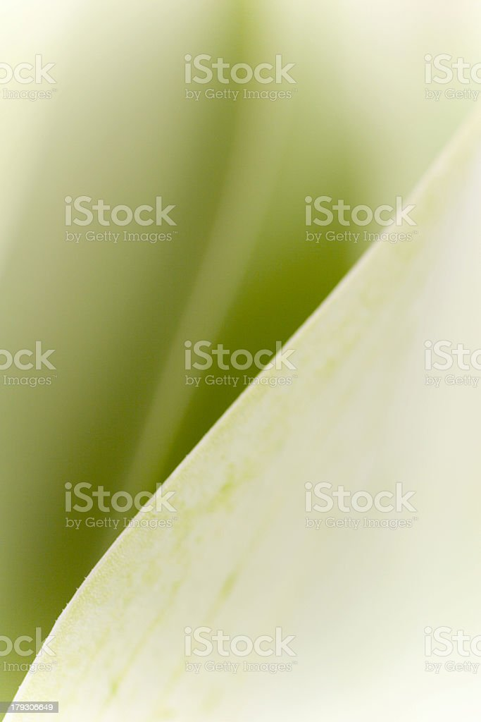 Abstract Leaf I stock photo