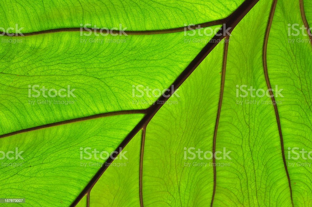 Abstract leaf. royalty-free stock photo