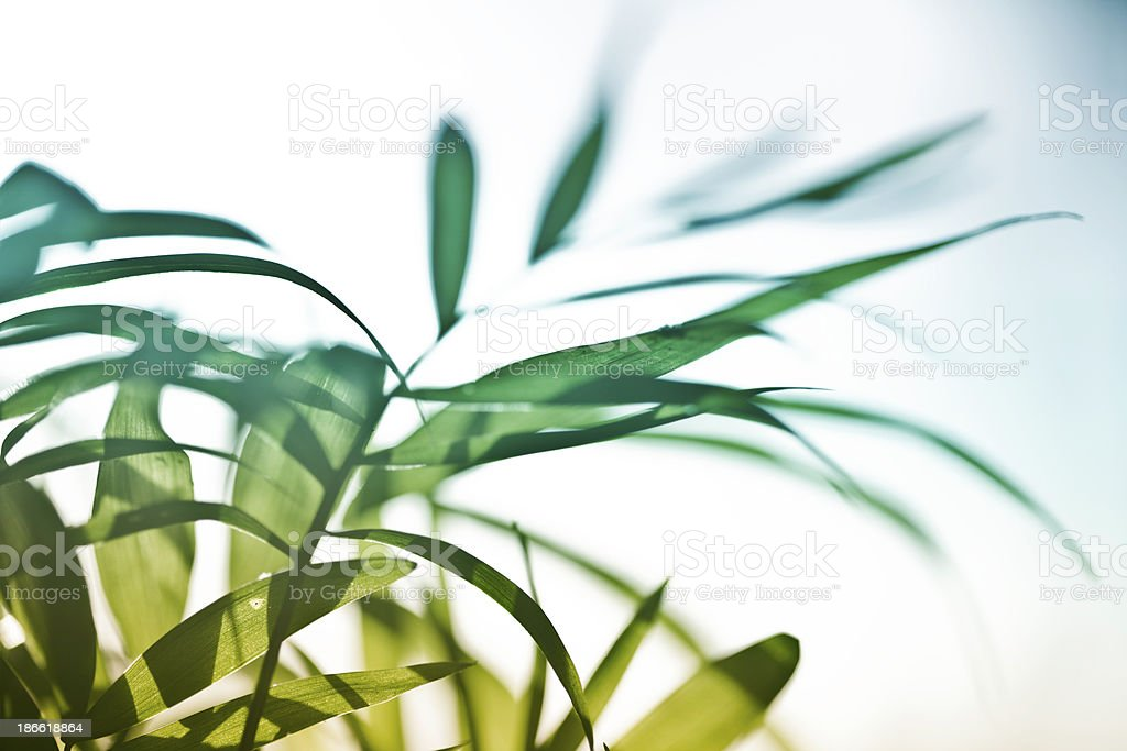 Abstract Leaves royalty-free stock photo