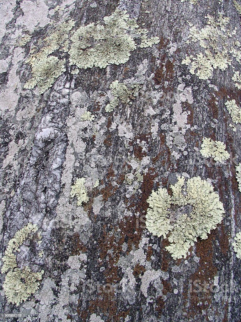 Abstract - Lichen 3 royalty-free stock photo
