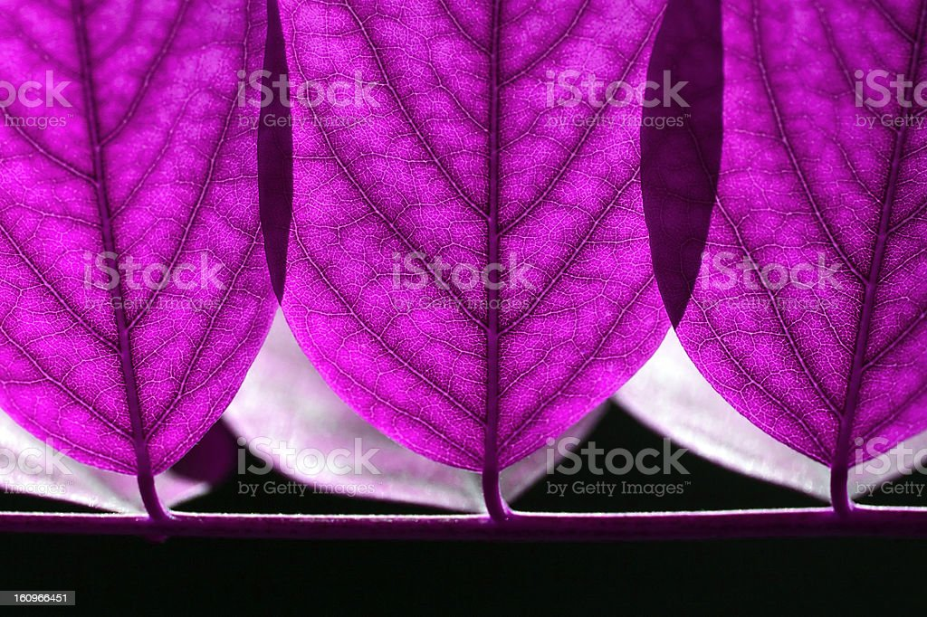 Abstract lilac leaves royalty-free stock photo