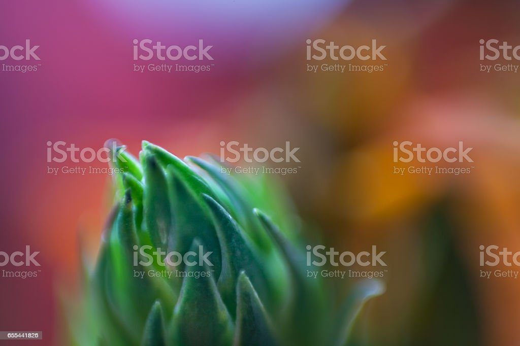 Abstract macro with green plant and multicolored flowers stock photo