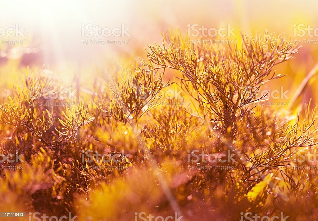 Abstract meadow royalty-free stock photo