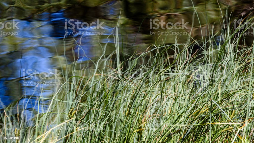 abstract midsummer reflection in water stock photo