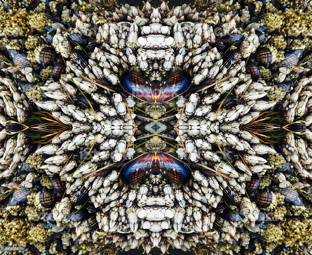 Abstract Mollusk Kaleidoscope Background royalty-free stock photo