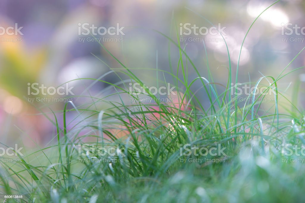 Abstract natural backgrounds grass. stock photo