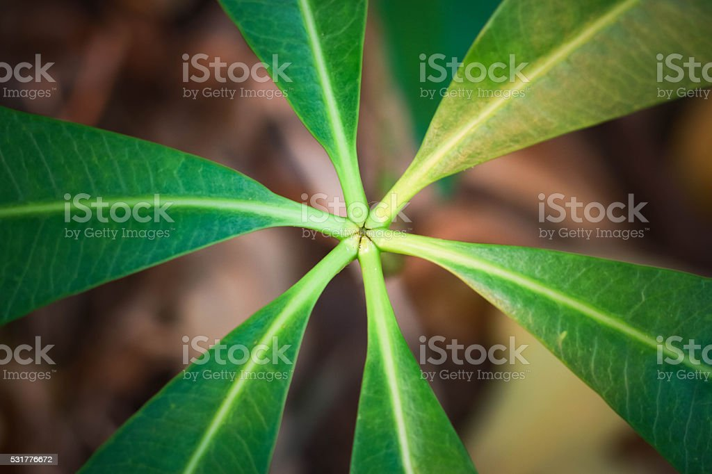 abstract natural stock photo