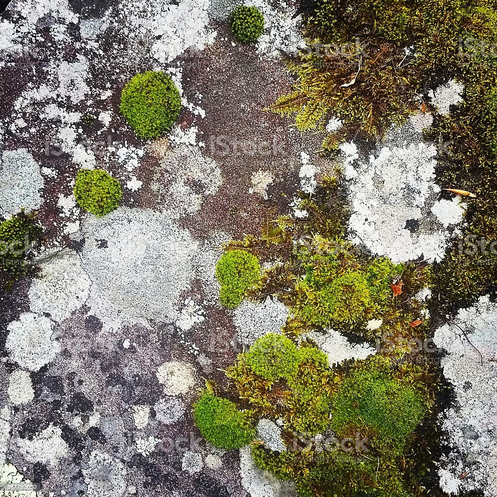 Abstract Nature Background Moss Covering Rock Catskills New York stock photo