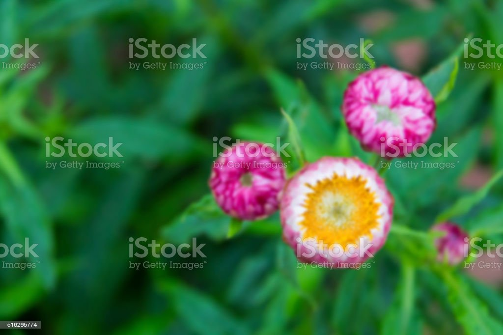 Abstract nature blured background stock photo