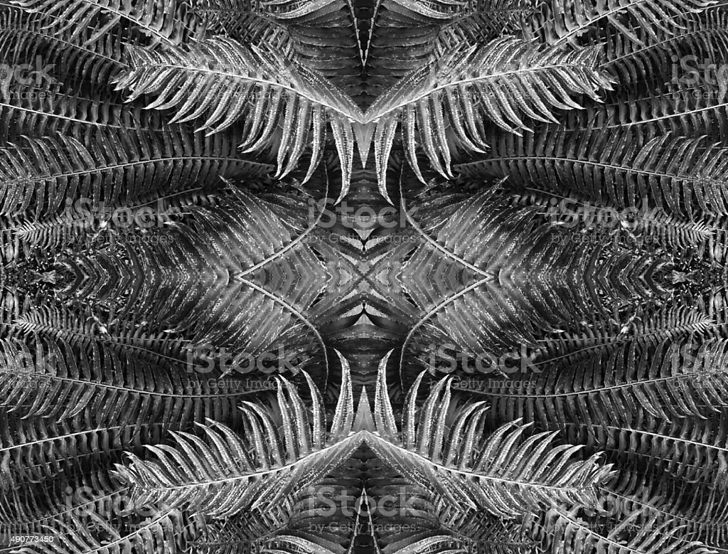 Abstract nature kaleidoscope pattern of fern plant royalty-free stock photo