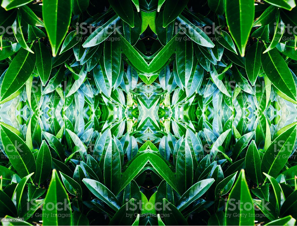 Abstract nature kaleidoscope pattern of leaves stock photo