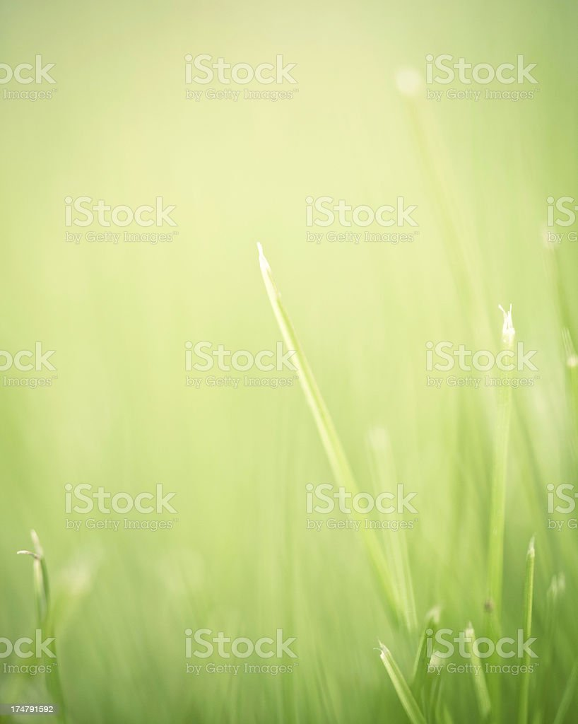 Abstract Nature royalty-free stock photo
