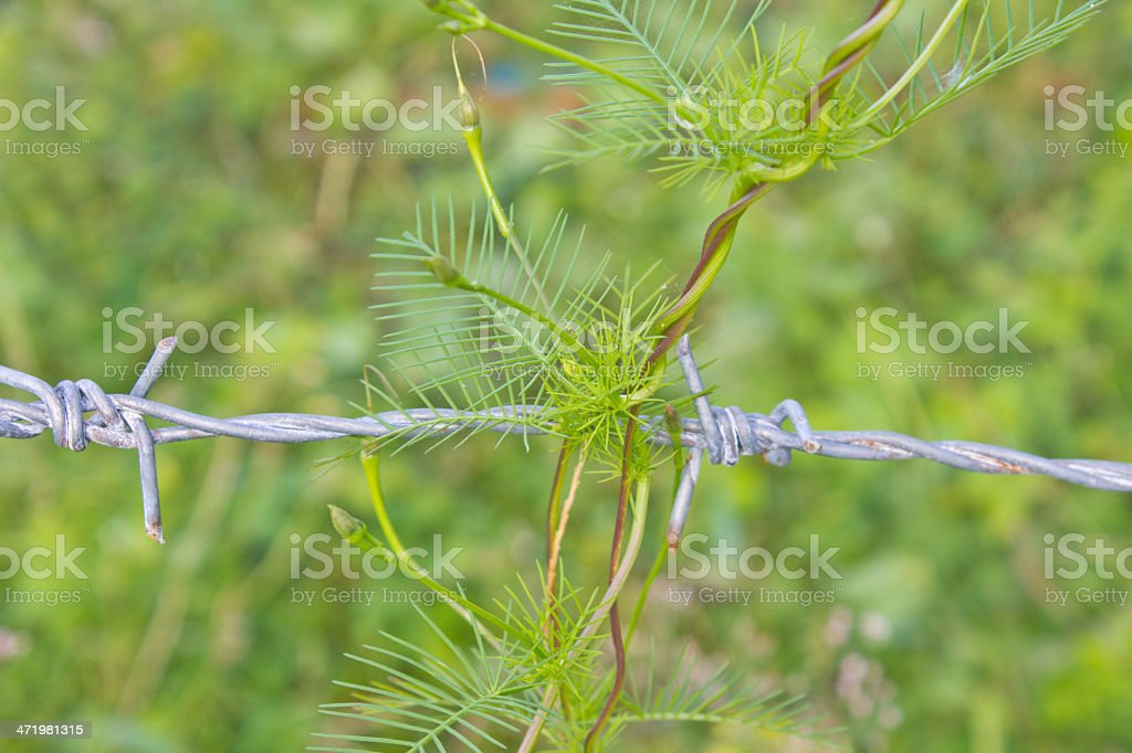 abstract nature stock photo