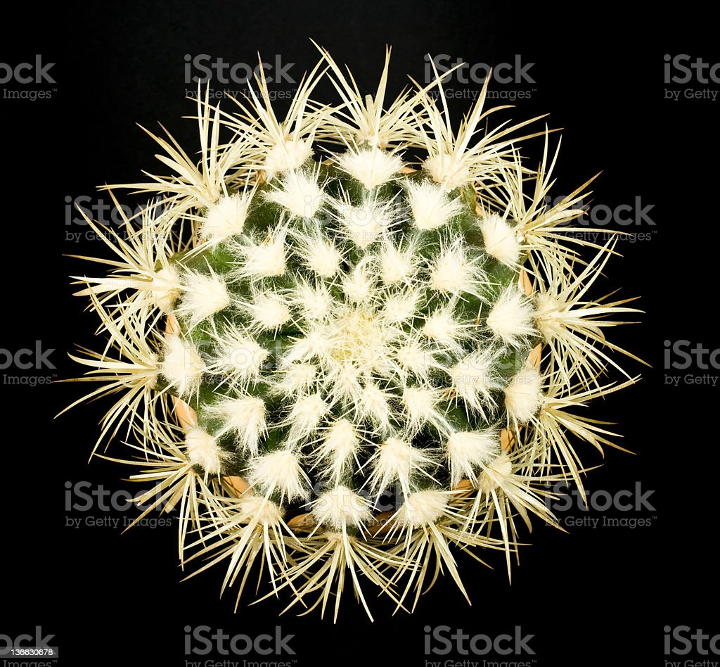 Abstract of Golden Barrel Cactus. stock photo