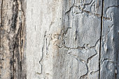 Abstract old wood as background  or texture