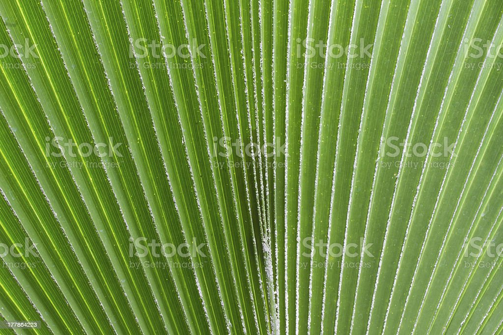 abstract palm leaf background royalty-free stock photo