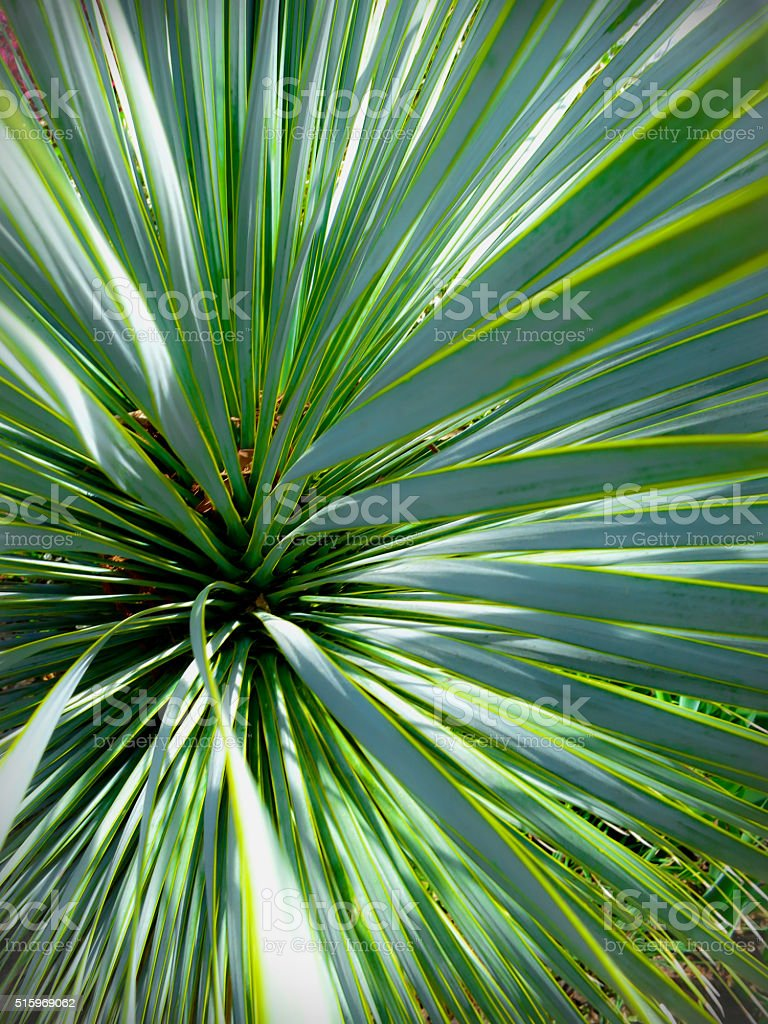 Abstract Palmetto Leaves stock photo