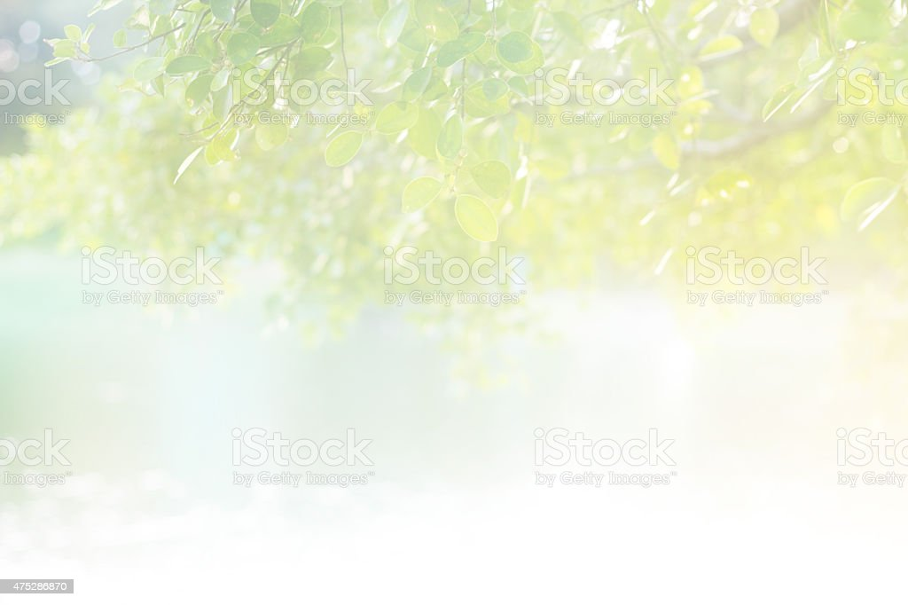 Abstract pastel color soft light morning sunshine on the leaf stock photo