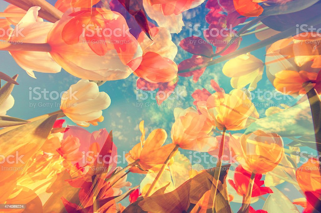 Abstract pastel colored background with flowers, tulips and soft hues stock photo