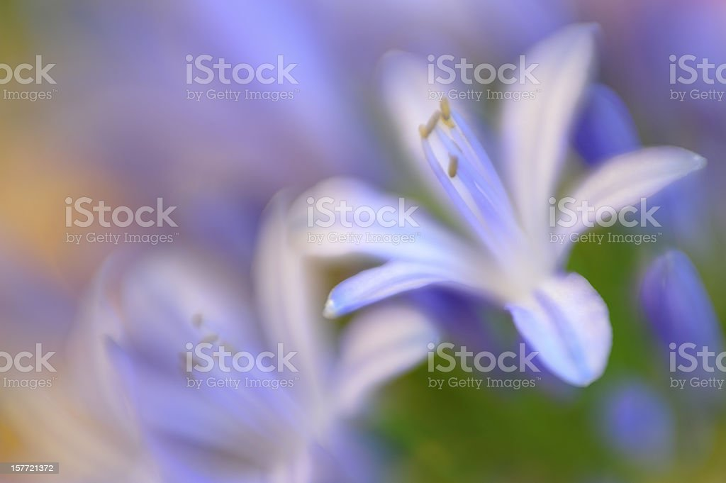Abstract Pastel Lavender Spring Flowers royalty-free stock photo