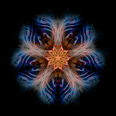 Abstract Pentagonal Flower