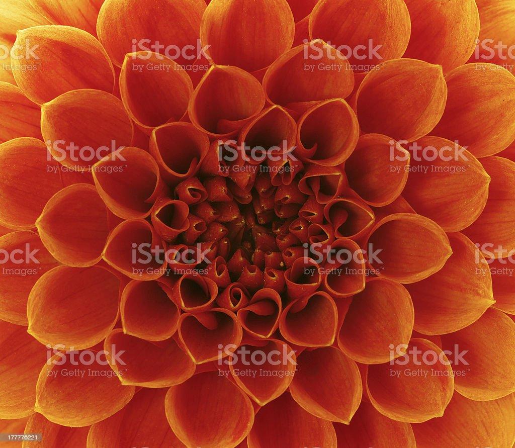 Abstract petals stock photo