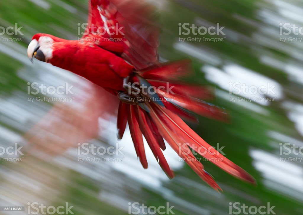 Abstract photo of flying parrot. Out of focus stock photo