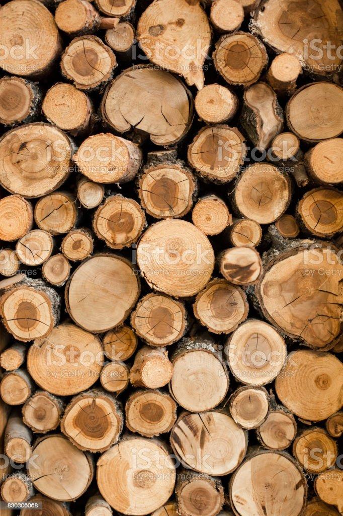Abstract photo of nature oak stock photo