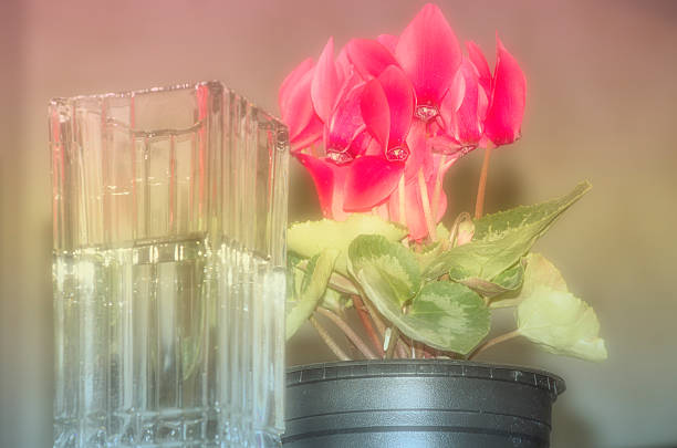 Pics Of Colorful Flowers Vase Pictures Images And Stock Photos Istock