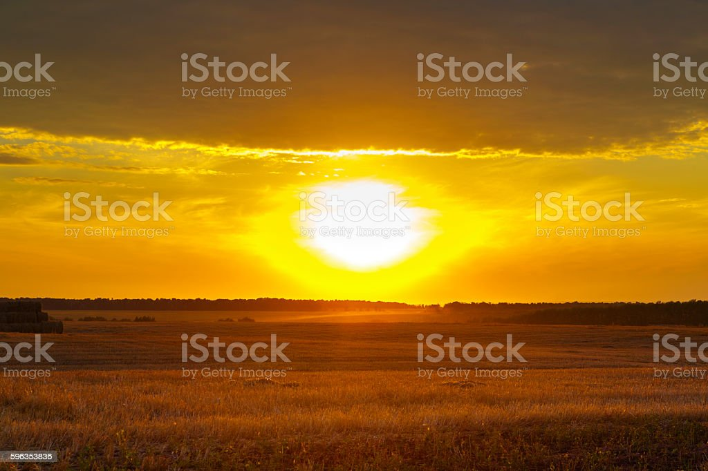 abstract photo of wheat field and bright bokeh lights stock photo