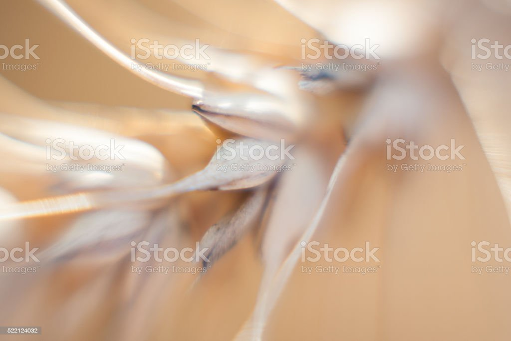 Abstract picture of wheat ear stock photo