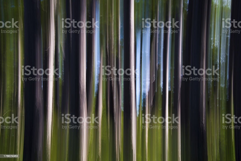 Abstract Pines royalty-free stock photo