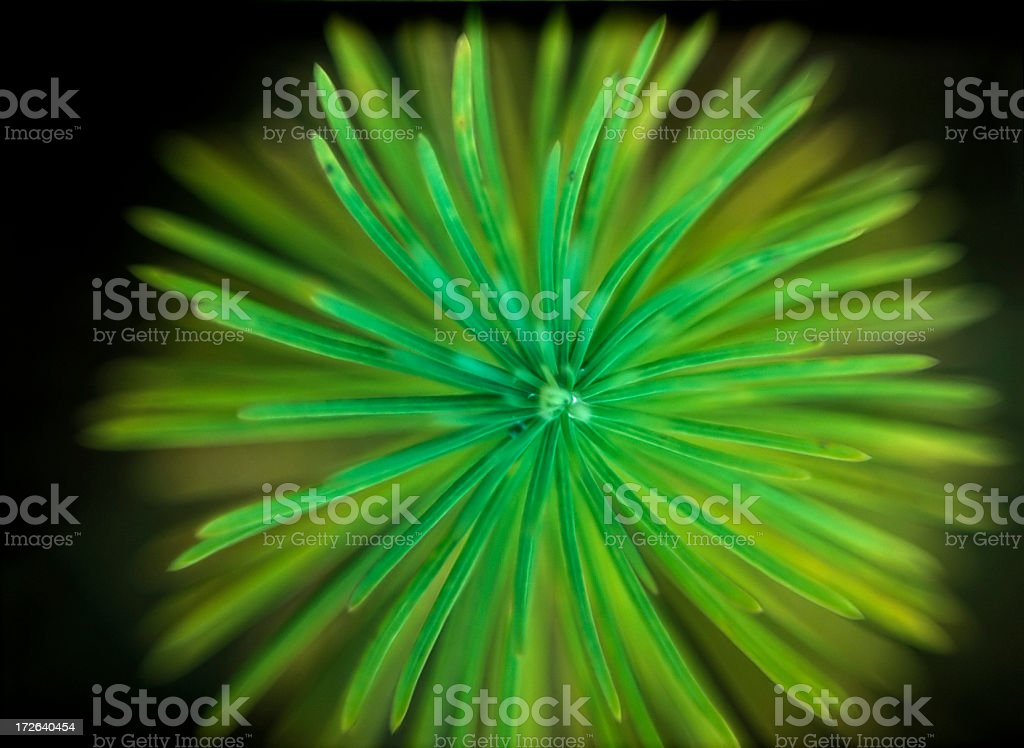 Abstract plant_1 royalty-free stock photo