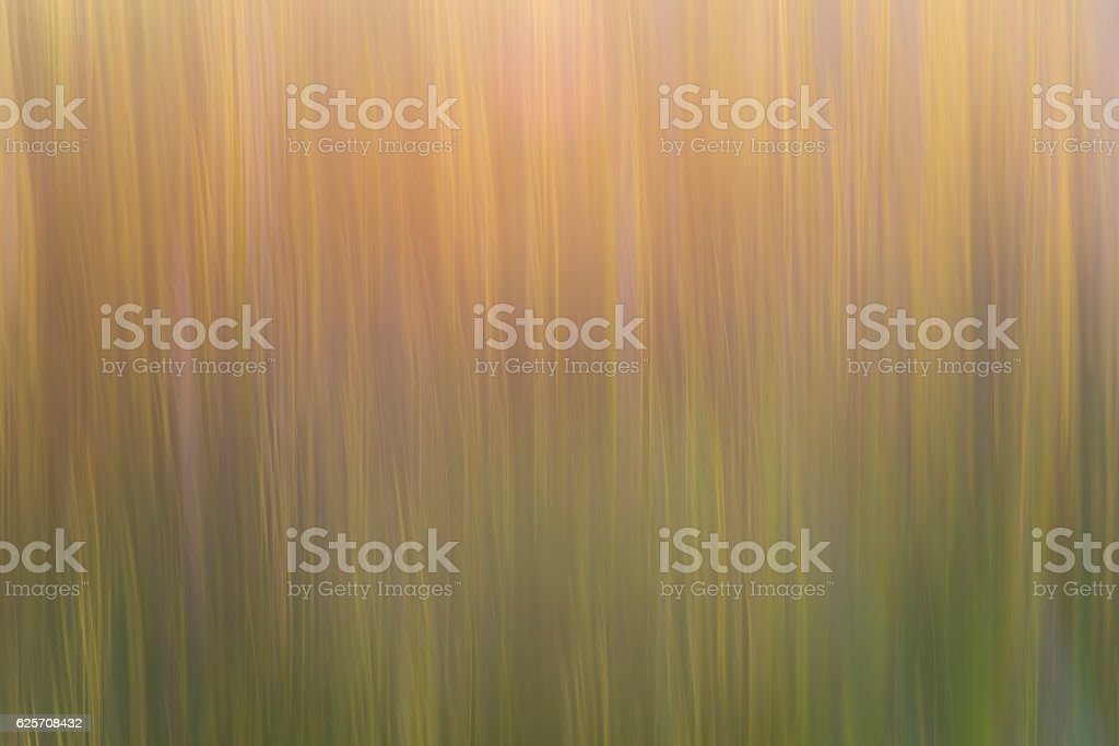 Abstract plants stems. stock photo