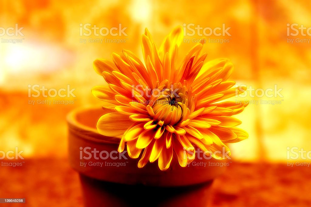 Abstract Potted Flower 3 royalty-free stock photo