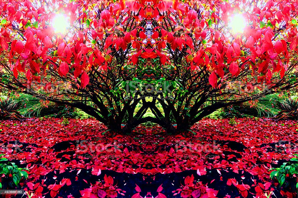Abstract red flower kaleidoscope royalty-free stock photo