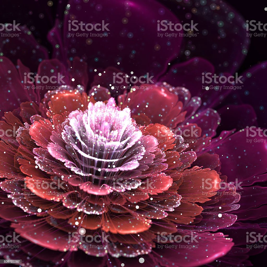 abstract red flower stock photo