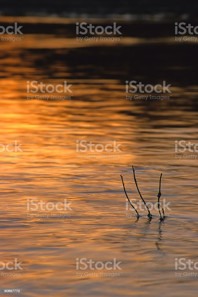 abstract river twig sunset landscape royalty-free stock photo