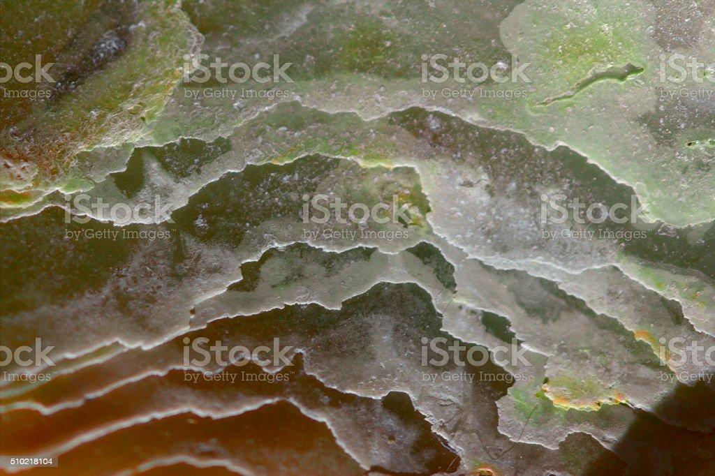 Abstract Seashells Background - Macro, multi-color, texture stock photo
