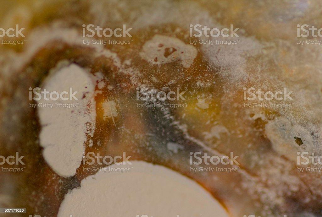 Abstract Seashells Close up - background, backdrop stock photo