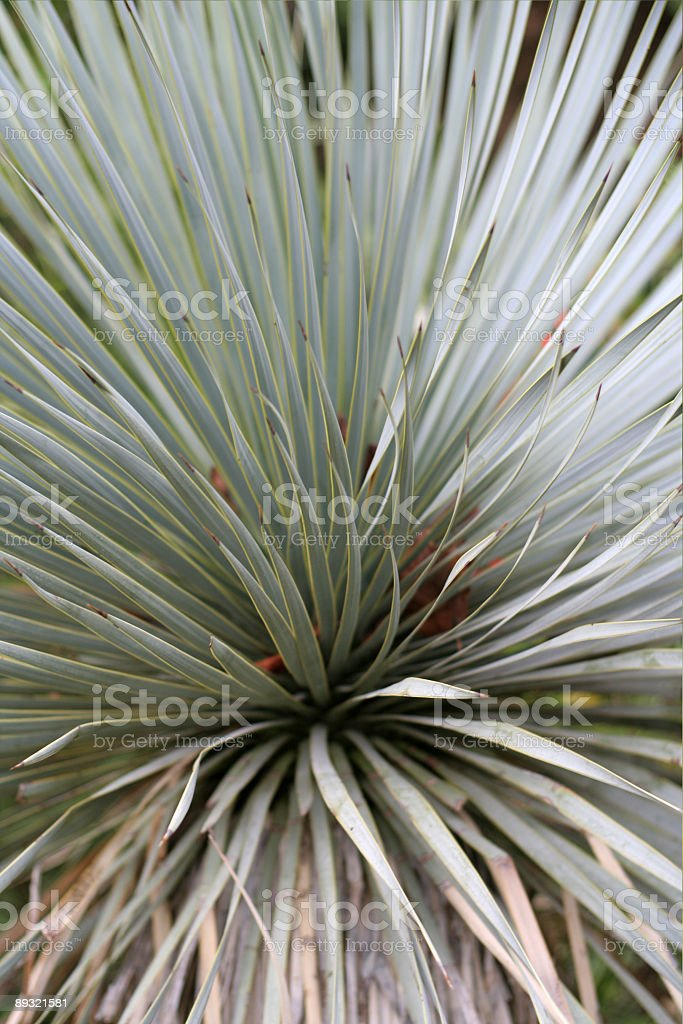 abstract shrub royalty-free stock photo