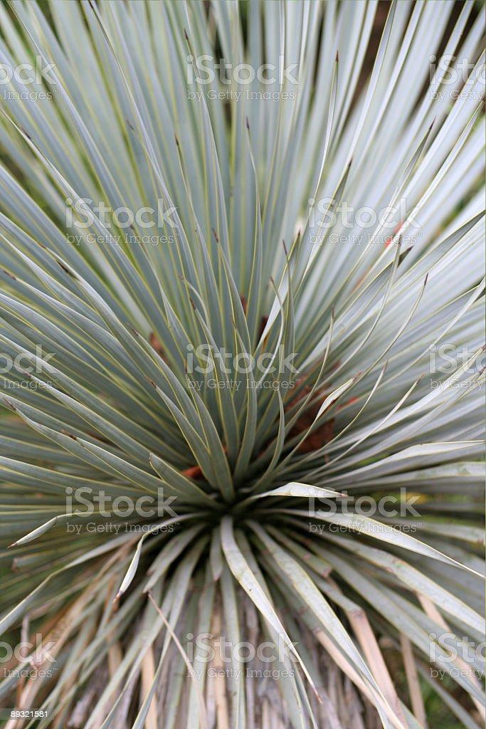 abstract shrub stock photo