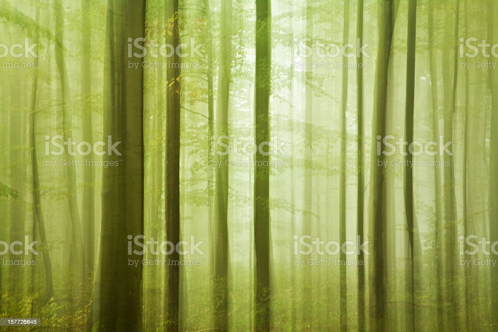 Abstract Silhouette of Green Forest with Blurred Motion stock photo
