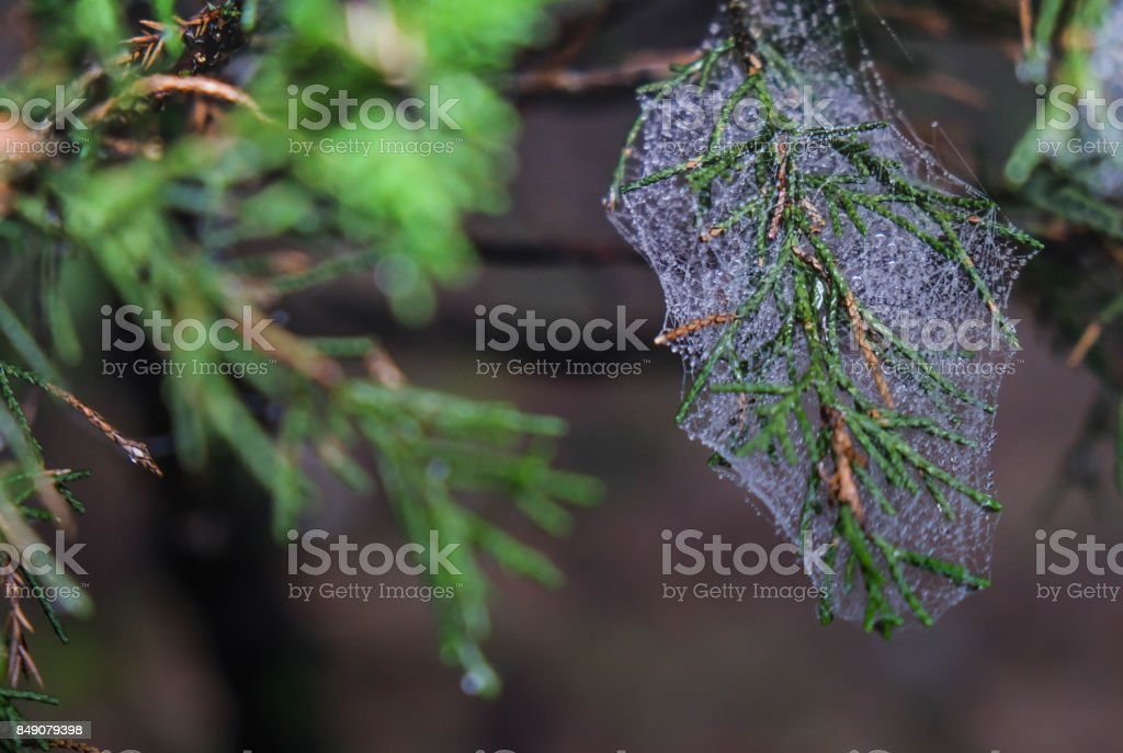 Abstract Spiderweb on black background. It'u2019s seen in the nature. stock photo