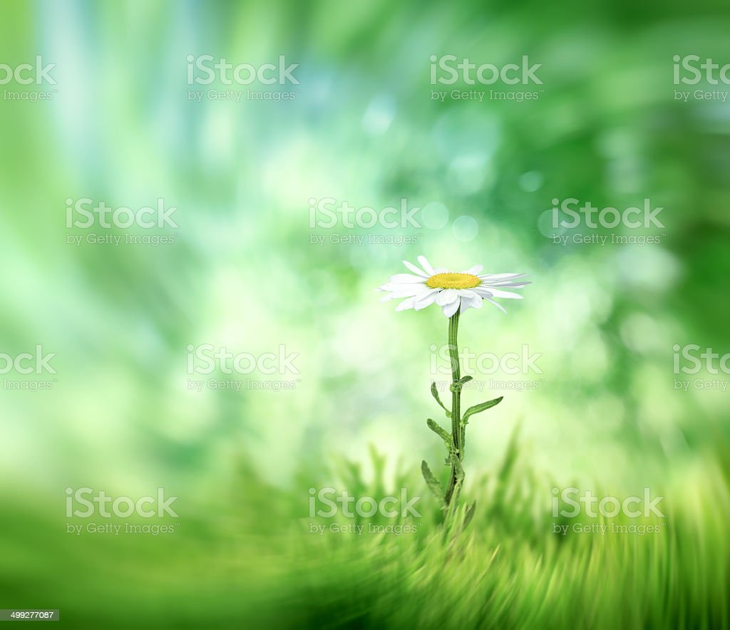 abstract summer natural background with camomile vector art illustration