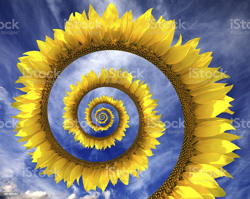 Abstract sunflower spiral stock photo