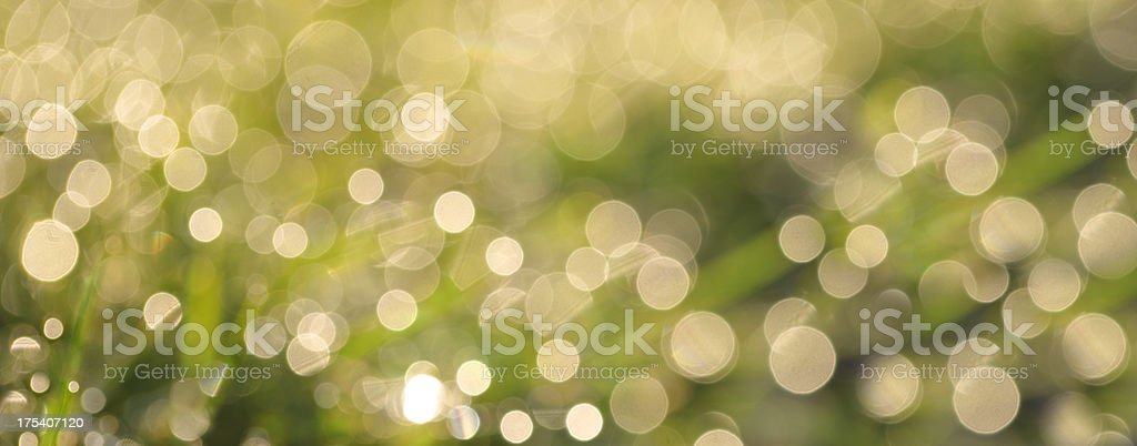 Abstract Sunlit Grass stock photo