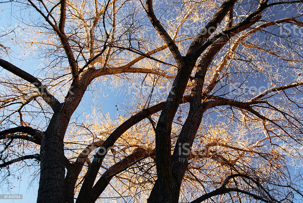 abstract sunset tree light and shadow contrasts stock photo