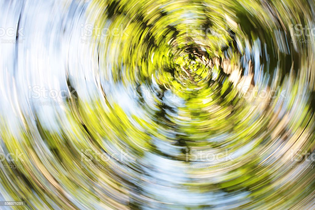 Abstract Swirl of Leaves on Elm Trees stock photo