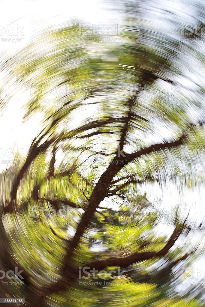 Abstract Swirl of Leaves on Tree stock photo